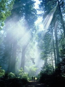 james-blank-haze-in-redwood-national-park-california